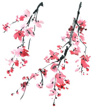 Ilustración acuarela y tinta del árbol de sakura en flor con flores rosas sobre fondo blanco. Pintura tradicional oriental en estilo sumi-e, u-sin.