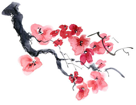 Watercolor and ink illustration of blossom sakura tree with flowers and buds. Oriental traditional painting in style sumi-e, u-sin and gohua. Reklamní fotografie