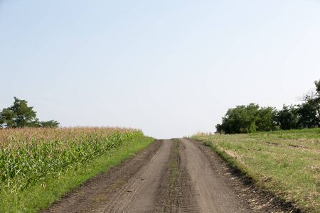 suspenso: Camino del campo, desapareciendo en el cielo a lo largo de un campo de maíz