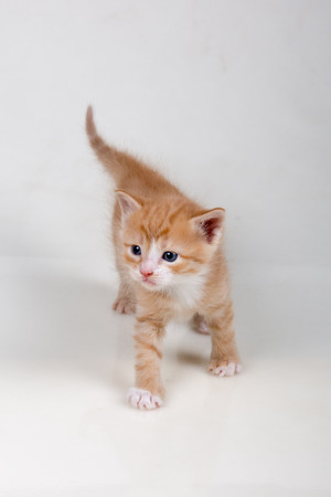 Little tender kitten on white background