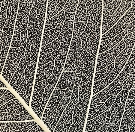 macro shot of the veins on a leaf against a black background Stock fotó