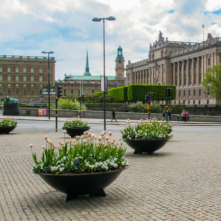 Stockholm Sweden -  May 16 2011: Spring flowers in the center of Stockholm on the background of a beautiful view of the Parliament (Riksdag) and the Royal Palace