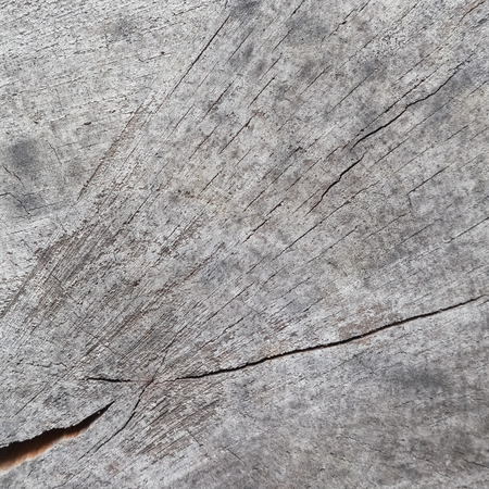 Background from cross section of tree trunk. Abstract texture from the rings of old weathered wood with a crack