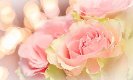 精致的淡粉色玫瑰。完美的背景贺卡和婚礼请柬,生日,情人节,母亲节。