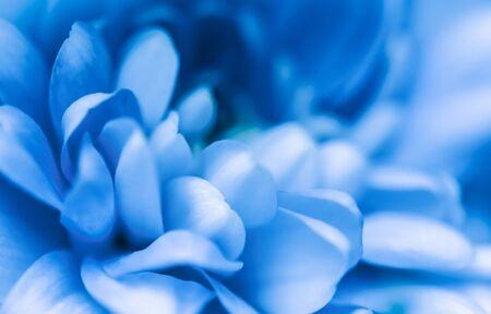 Retro-Kunst, Vintage-Karte und botanisches Konzept - abstrakter Blumenhintergrund, blaue Chrysanthemenblume. Makroblumenhintergrund für Feiertagsmarkendesign