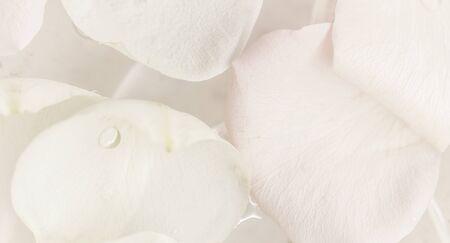 Concept botanique, carte d'invitation de mariage - Flou artistique, fond floral abstrait, fleur rose blanche. Toile de fond de fleurs macro pour la conception de marque de vacances Banque d'images