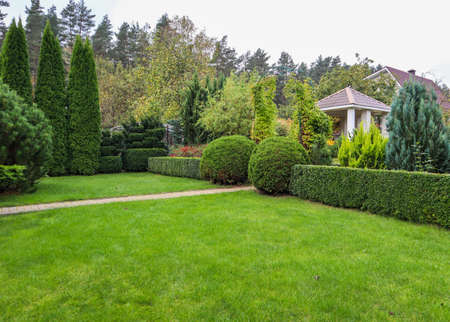 Landscaping of a garden with a bright green lawn, colorful shrubs, decorative evergreen plants and shaped boxwood (Buxus Sempervirens) in autumn. Gardening concept. Stock Photo