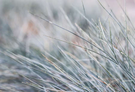 Blurred background, texture, pattern of blue green grass. Extreme bokeh with light reflection. Natural backdrop.