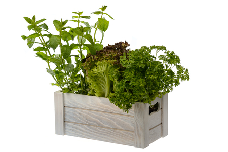 Fresh potted lettuce, mint and parsley in wooden box isolated. Imagens