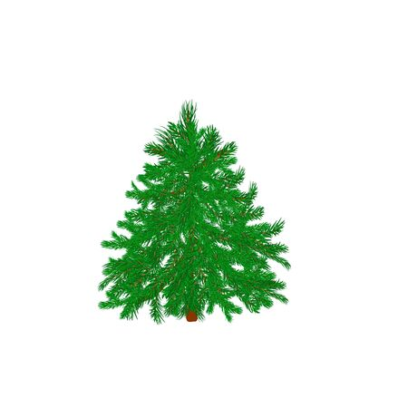 conifers: Green Christmas tree. Vector.