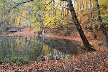spilled leaf landscape in seven lakes nature park forest