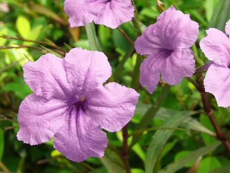 Purple Flowers In The Garden photo
