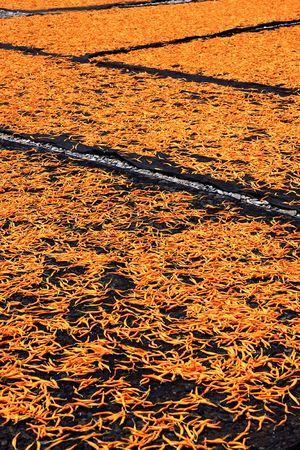 insolaci�n: Las flores est�n a la espera de la insolaci�n dom.