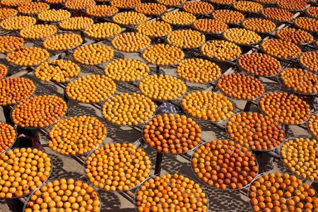 acceptance: Persimmon in the open acceptance of solar insolation Stock Photo