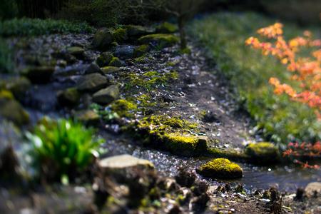 streamlet: Through the green-Keukenhof-Holland Streamlet