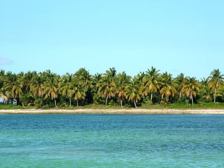 Scenic view from the ocean of a row of dense palm trees against a blue sky.