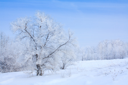 refrigerate: Winter landscape with white trees covered with frost