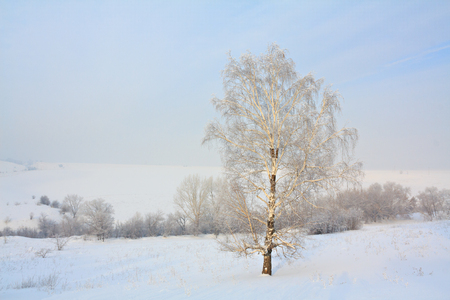 refrigerate: Winter landscape with white trees covered with snow. Stock Photo