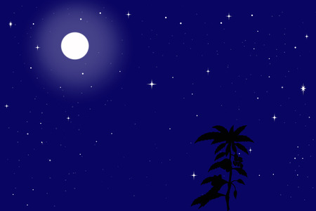 starry night: Night background with starry sky