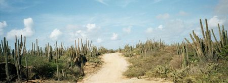Aruba Cactus Landscape Carribean Scene photo