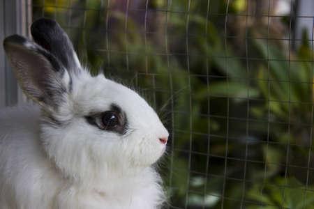 lovely white rabbit in hutch