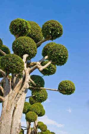 dwarf trees Stock Photo