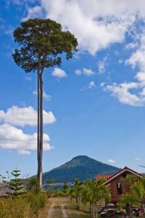 topmost trees Editorial