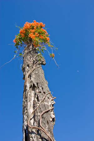 floral on top of dry trees