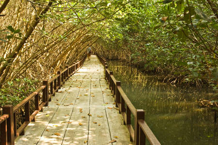 sidewalk around mangrove swamp photo