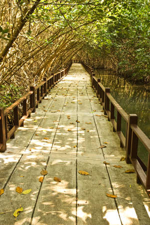 sidewalk around mangrove swamp