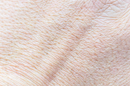 Pattern of human skin with cells and lines texture. Stock Photo
