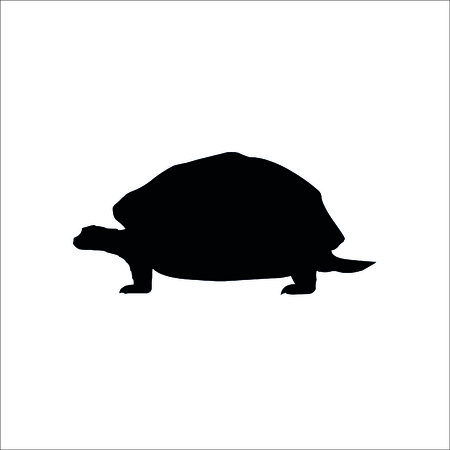 Turtle icon on white background. Vector Illustration.