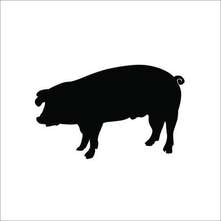 Pig icon on white background. Vector Illustration. Illustration