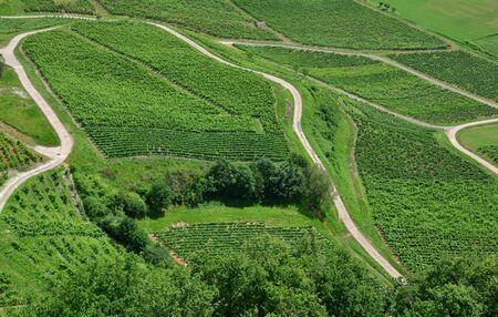 Weite Weinberge in der Landschaft des Elsass
