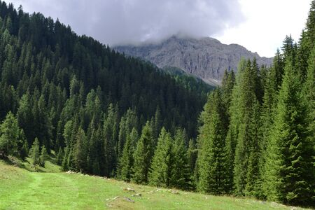 Forests in a valley of Austria on the border with Italy