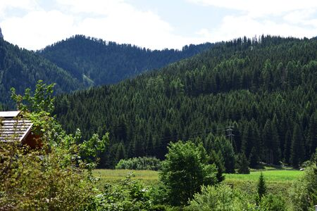 Woods and green pine forests in the mountains