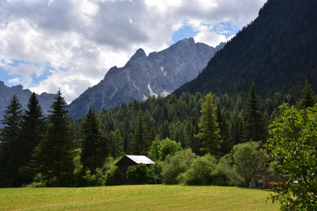 Pine woods under the Dolomites at the edge of the meadows in the village of Moso