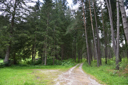 Dirt road in the woods towards no one knows where