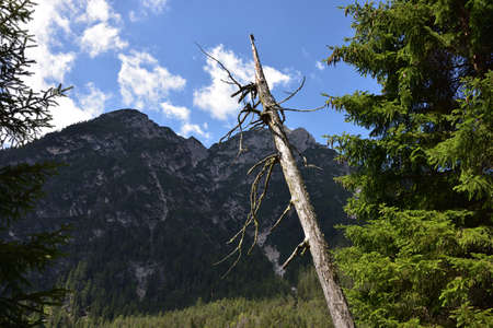 An old bare trunk in front of Mount Serla
