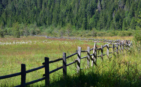 A long old fence in the valley of Lake Dobbiaco