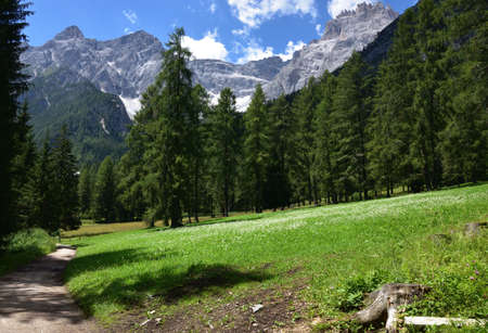 Walk in the woods under the first peaks of Punta Tre Scarperi in Val Fiscalina