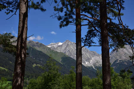 Peaks in the Anterselva valley framed by pine tree trunks
