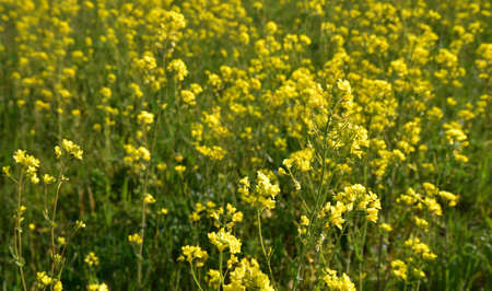 Sprigs of flowers on the almost uniform yellow background Stock Photo