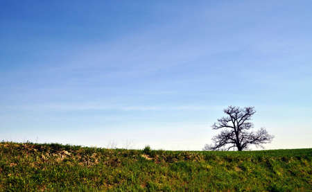 Lonely tree on a hill of the Reggiano Apennines in an early autumn day