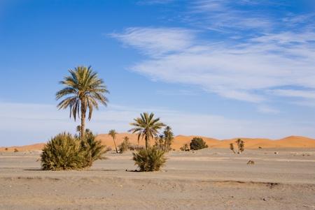 oasis on the desert photo