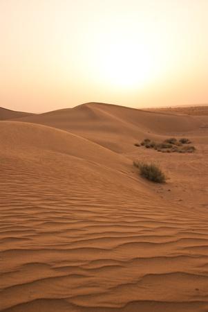 Thar desert photo