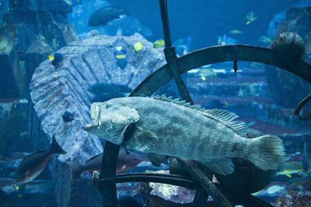 sunk: Mysterious ruins of a former civilization lie forgotten undersea Stock Photo