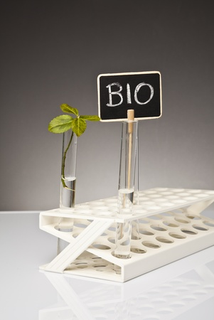organic concept: bio and organic concept  Stock Photo