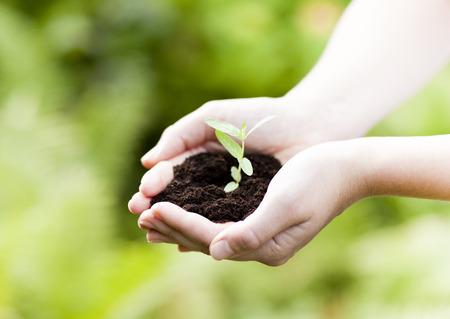 plant in hands - Gras Hintergrund