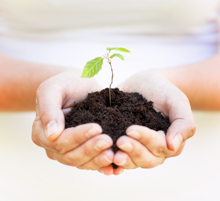 planting a tree: planting a tree Stock Photo